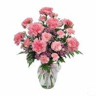 Carnation in Vase