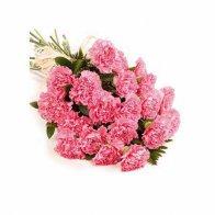 Classic Carnations
